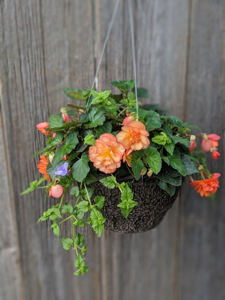 Hanging baskets of plants